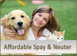 Affordable Spay & Neuter